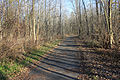 Gfp-wisconsin-pike-lake-state-park-hiking-trail.jpg