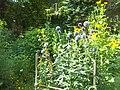 Giardino botanico di Brera (Milan) 160.jpg