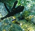 Glover's Reef 2-15 (33292057246).jpg