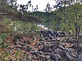 Gravrøse fra Skotfoss.jpg