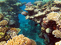 Great Barrier Reef 008 (5387514565).jpg