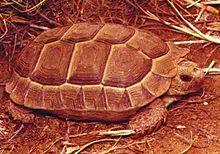 Natural Grassland Tortoise Food Bulk