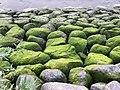 Green stones at river elbe.jpg