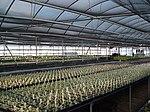 Greenhouse 1.JPG