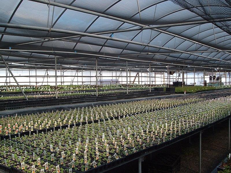 File:Greenhouse 1.JPG