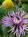 Grenchen - Insect on purple flower.jpg