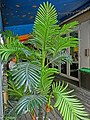 HK Jordan Austin Road green plant leave Mar-2013.JPG