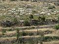 Hadassah Trail P1150410.JPG