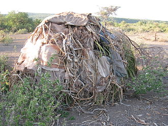 Hadza people - The Hadza's way of life is highly conservative. Huts have been built in this style for as long as records have been kept.