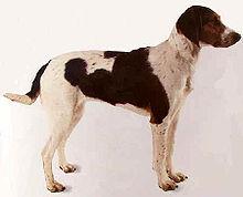 Halden Hound, Picture Of Array : Halden Hound   Wikipedia, The Free Encyclopedia: Halden Hound   Wikipedia, the free encyclopedia