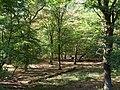 Hambach forest 38.jpg
