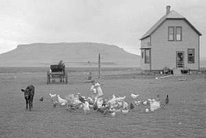 Home - 1910 American homestead