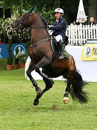 Hans-Dieter Dreher Magnus Romeo Pferd International 2011.JPG