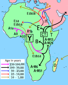 Haplogroup B-M60 - Wikipedia