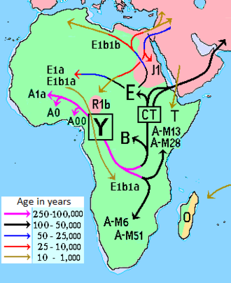 Haplogroup B-M60 - The geographical concentrations of major haplogroups, including B-M60, in Africa.