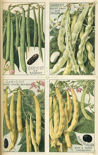Phaseolus vulgaris - Image: Haricots Plantes potagères Vilmorin Andrieux et Cie