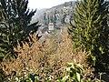 Haselnussstrauch - panoramio.jpg