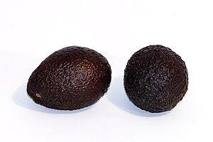 Hass avocado - Image: Hass avocado white background