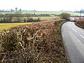 Hedge west of Yorkley Lane on its way towards Yorkley - geograph.org.uk - 1672310.jpg