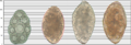 Helminth egg sizes 2.png