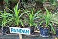 Herbs at Bohol Bee Farm a.jpg