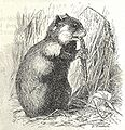 Heubach hamster.jpg