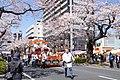 Hitachi Sakura Festival, Ibaraki 03.jpg