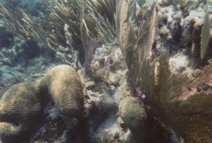 Hol Chan Marine Reserve - Corals lining the Hol Chan Cut