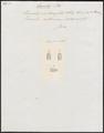 Homalopsis decussata - kop - 1837 - Print - Iconographia Zoologica - Special Collections University of Amsterdam - UBA01 IZ12000193.tif