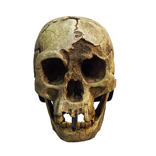 <i>Homo floresiensis</i> Archaic human from Flores, Indonesia