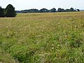 Honeydown Copse - geograph.org.uk - 524915.jpg