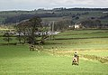 Horses and hounds - geograph.org.uk - 1770019.jpg