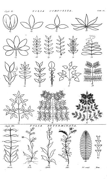Hortus Cliffortianus folia compos