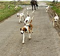 Hounds - geograph.org.uk - 693889.jpg