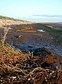Humber Bank near Sunk Island Sands - geograph.org.uk - 276038.jpg