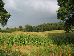 Hunsterson farmland.jpg