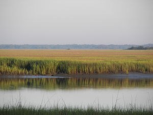 South Carolina Lowcountry - A scenic vista from an observation area at Hunting Island State Park near Beaufort. Such marsh views are emblematic of the Lowcountry and its landscapes.