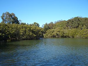 Oatley Bay - Hurstville Grove mangroves, view from Oatley Bay