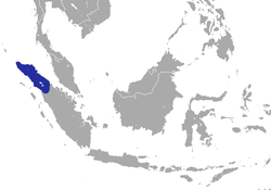 Hutan Shrew area.png
