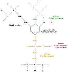 220px-Hydroxypyridinium