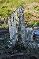 Ice Sculpture - Flickr - Andrea Westmoreland (1).jpg