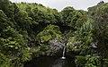 Ilha das Flores P5280282 (36010337775).jpg