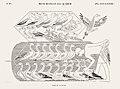Illustration from Monuments de l'Egypte de la Nubie by Jean-François Champollion, digitally enhanced by rawpixel-com 70.jpg