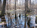 Image-Great Swamp National Wildlife Refuge New Jersey01.jpg