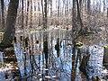 Image-Great Swamp National Wildlife Refuge New Jersey01.jpg