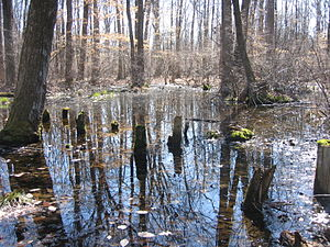 Great Swamp National Wildlife Refuge - Image: Image Great Swamp National Wildlife Refuge New Jersey 01