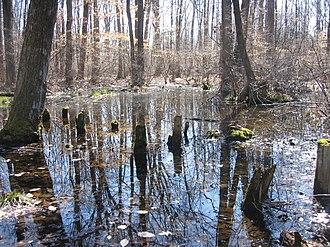 Great Swamp National Wildlife Refuge - Image: Image Great Swamp National Wildlife Refuge New Jersey 01