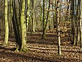 In Colwick Hall Woods - geograph.org.uk - 652777.jpg