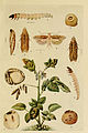 Indian insect life (Plate LVII) (6279523131).jpg