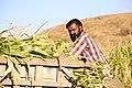 Indian village peoples 35.jpg